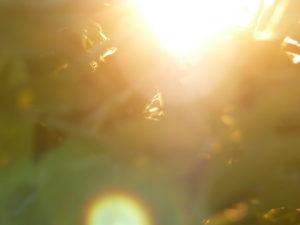 VERWIRKLICHE DAS LEBEN, DAS DU LIEBST - Eine Gebrauchsanweisung, dein Leben neu zu kreieren @ Gemeinschaftszentrum für Heilung | Steffisburg | Bern | Schweiz